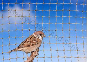 Knotted 19mm Sparrow Netting